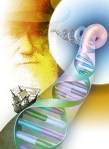 Riconoscimento paternità il test del dna (immagine da: scienzagiovane.unibo.it)